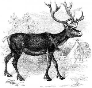 Охотник в Висконсине застрелил оленя с семью ногами