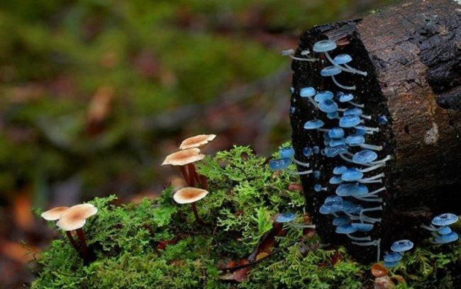 Удивительные австралийские грибы 2