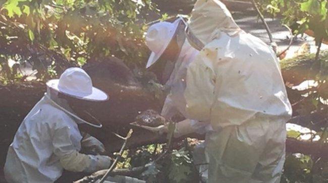 70 тысяч пчел остались без дома из-за торнадо 3